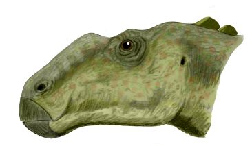 "<i>Gryposaurus</i> was a duck-billed dinosaur just like ""Joe"", but a member of a group that mostly lacked elaborate crests on top of their heads. Image by Nobu Tamura, CC-BY-SA 3.0."