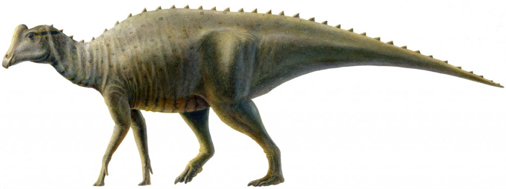 """Joe"" the Baby Parasaurolophus, by Lukas Panzarin"