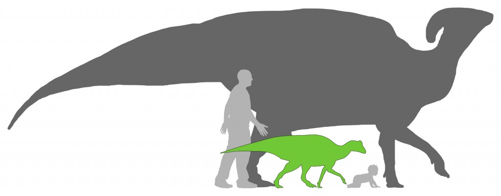 "The baby Parasaurolophus ""Joe"" compared in size to an adult Parasaurolophus, as well as adult and baby humans. Incredibly the baby human and ""Joe"" are both the same age--just under a year old! Dinosaur silhouettes by Matt Martyniuk (adult) and Scott Hartman (baby), used with permission. Human silhouettes by Andy Farke."