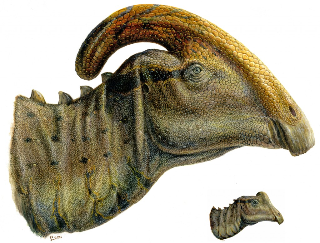 Adult and baby Parasaurolophus compared. Note that the baby lacks the big crest seen in the adult. Illustration by Lukas Panzarin.