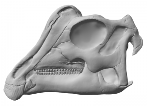 "A digital model of the skull of ""Joe"", by Ville Sinkkonen. To see a 3D version, visit this page."